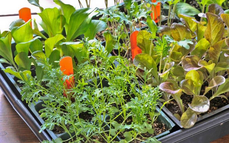 How to make an ecological garden