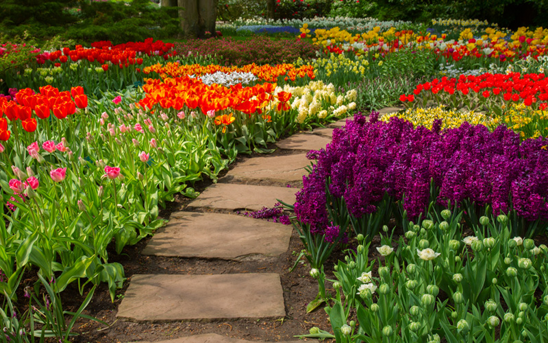 Ideas to create paths in your garden