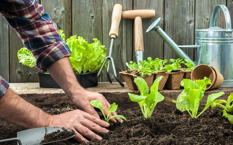 Basic tips for ecological garden