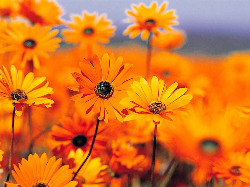 Beautiful orange flowers to decorate our corners