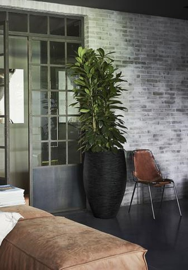 Cadix and Capi Planters: What's the best choice for an office?