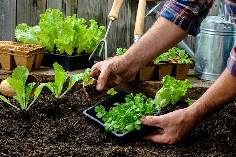 The best gardening guide for beginners