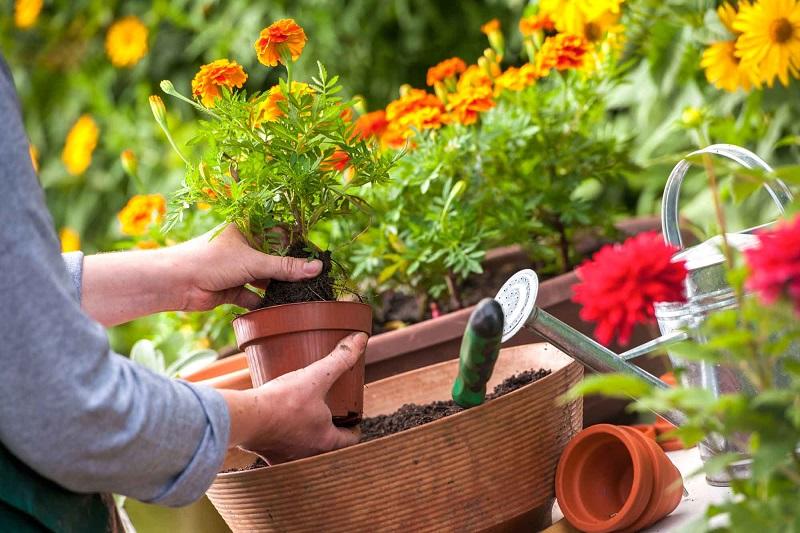 gardening guide for beginners