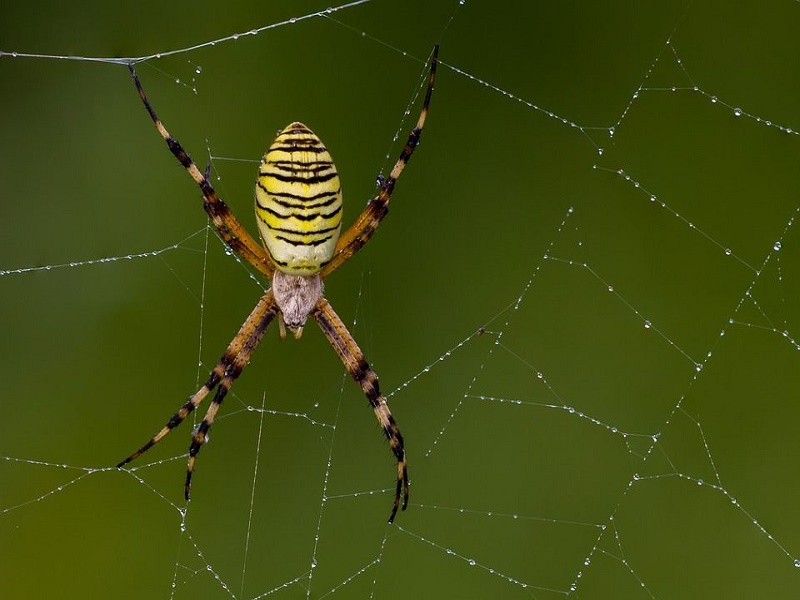 What are the benefits of having spiders in the garden