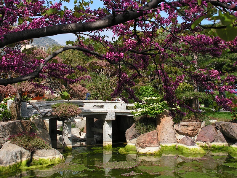 Japanese Gardens: its history and maximum representatives