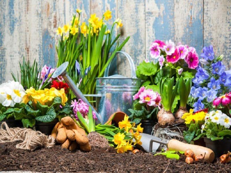 Green Guide: 10 garden tricks for beginners