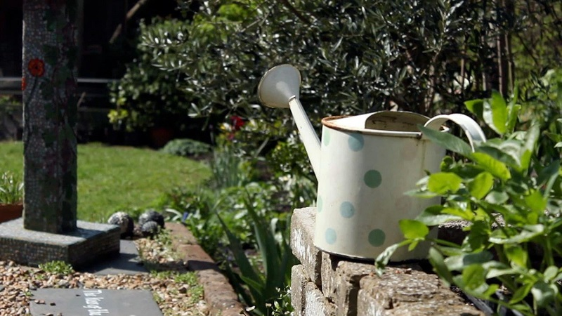 10 gardening tips to have your plants perfect