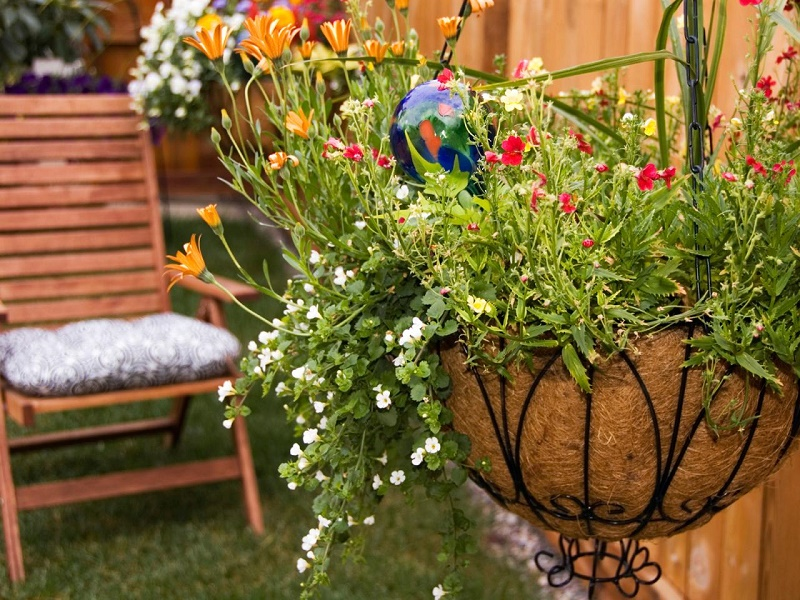 Outdoor plants with flowers for all season
