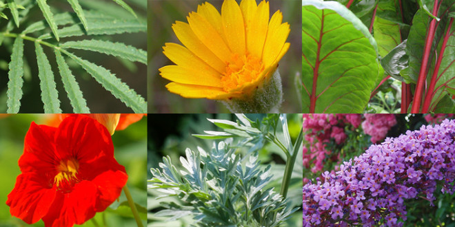 outdoor plants with flowers