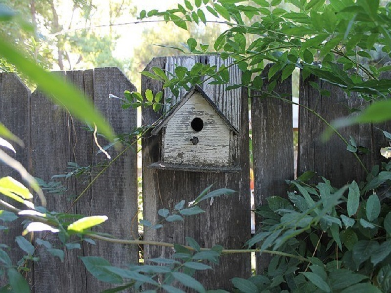 6 tips to design a rustic garden at home