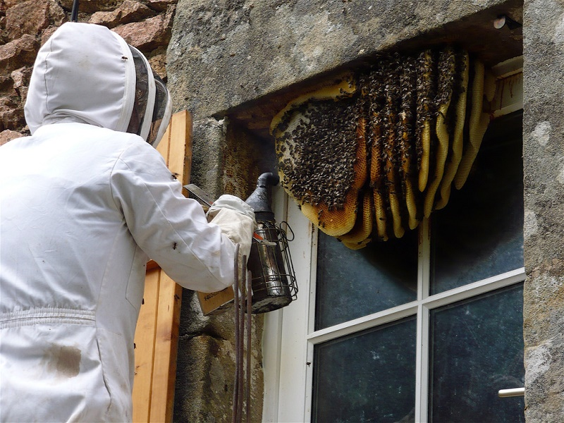 How to get rid of wasp nest in wall? Get solution