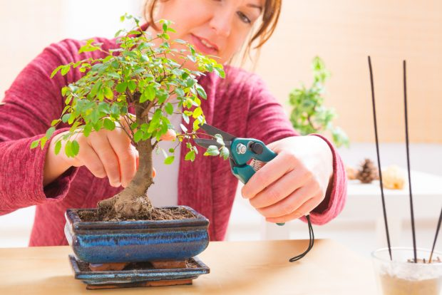 how to care for a bonsai tree