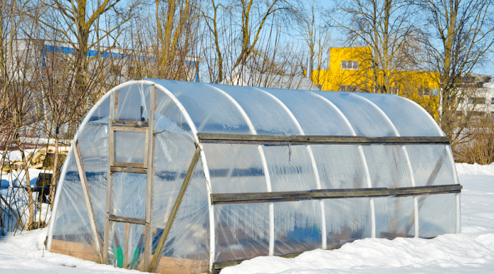 How to protect plants from winter? Safety tips