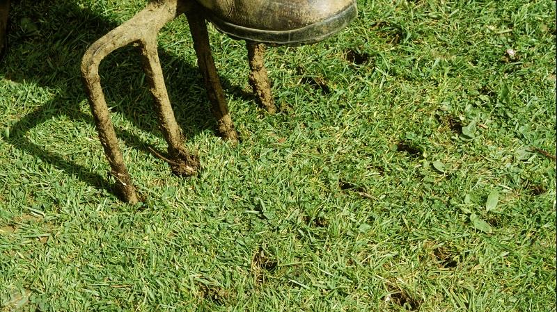 Lawn diseases