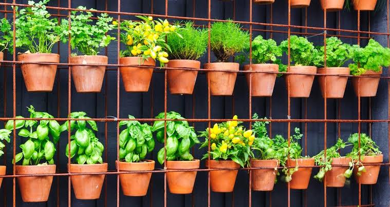 home gardening ideas
