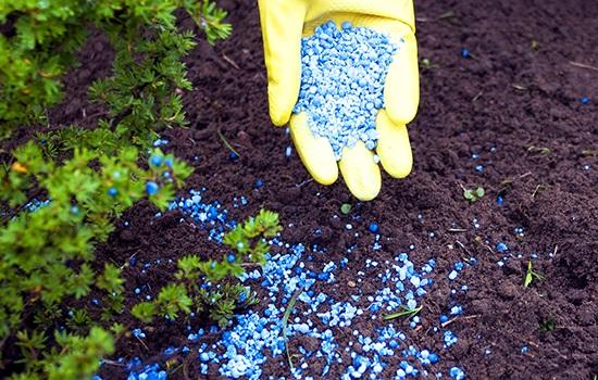 Correct fertilization of plants