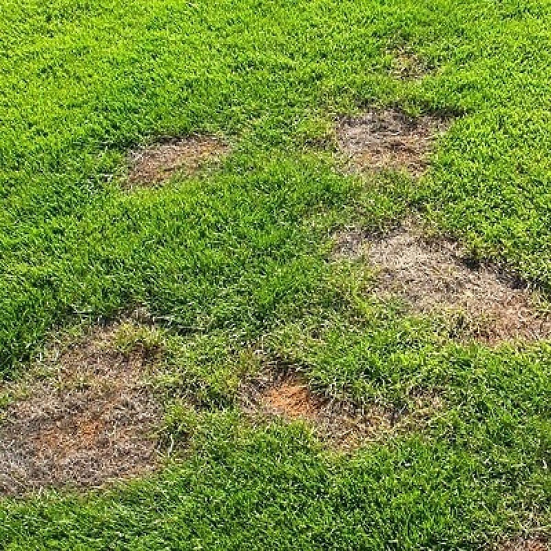 Improving damaged grass