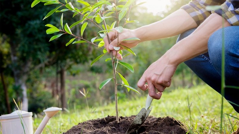 Plant trees with our 10 tips