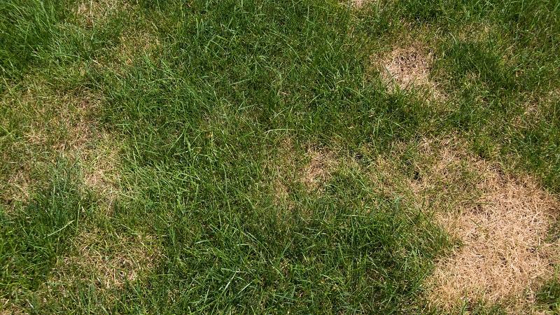 Improving damaged grass