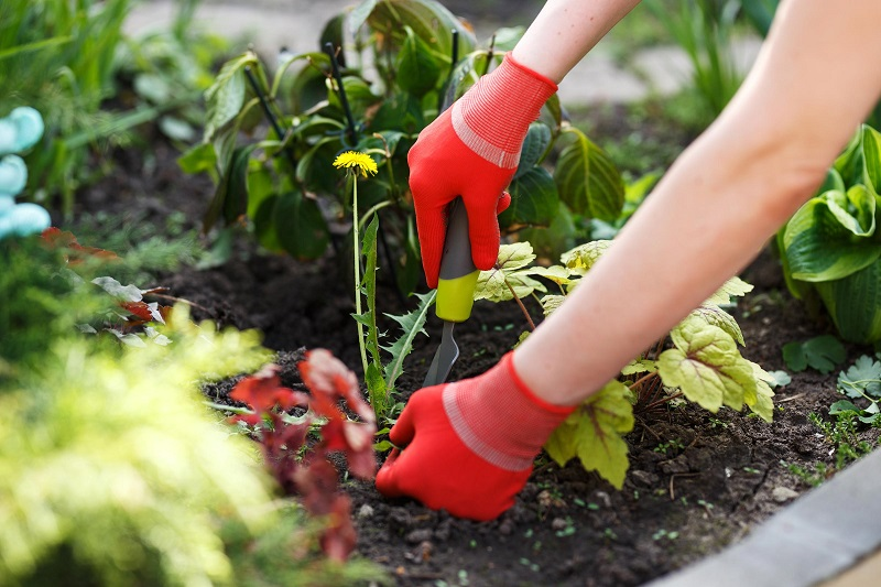 How to care for the garden on quarantine days