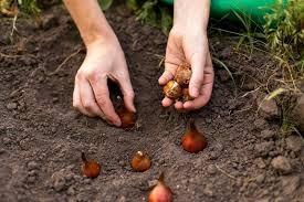 Garden Tasks for November